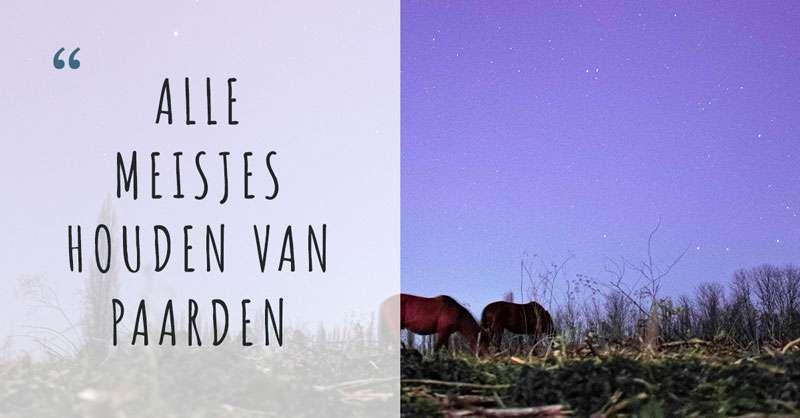 """Afbeelding van paarden onder een nachtlucht - daarnaast de tekst: """"Alle meisjes houden van paarden"""""""